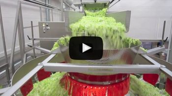 Salad Processing Video